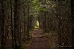 Gaspésie, péninsule de Gaspé - parc national Forillon