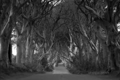 05/2016: Irlande du Nord (Ulster) - The dark Hedges