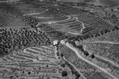 PORTUGAL: Vallée du Douro